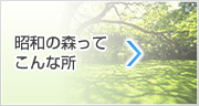 昭和の森ってこんな所